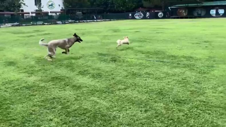 Köpekler enerjisini atmayı ve birbirleri ile sosyallesmeye bayılırlar.