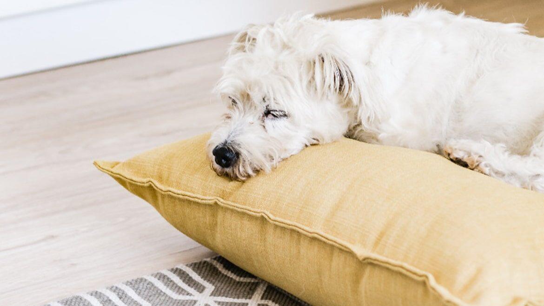 Aşırı Yorgun Köpek Mutlu Köpek Değildir!