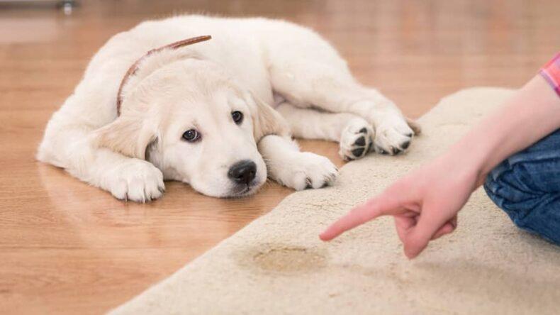 Yavru köpeğimin ev yerine dışarıda tuvalet yapmasını nasıl sağlarım?